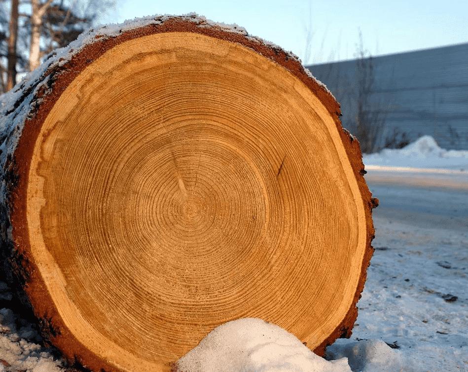 Самое Твердое И Огнеупорное Дерево